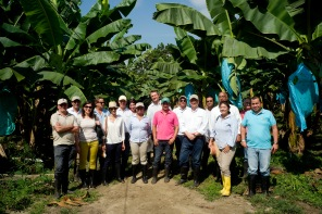 BananEx workshop in Santa Marta, Colombia Picture - David Bebber